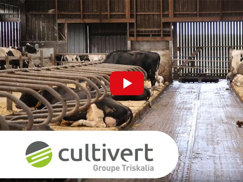 Vidéo Cultivert matelas élevage bovin