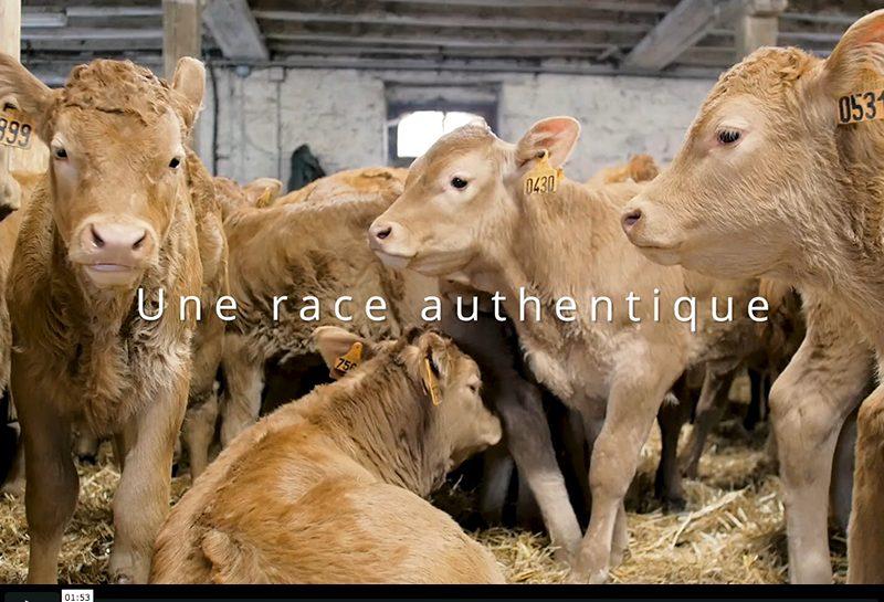Veau des Terroirs du Limousin, les vidéos