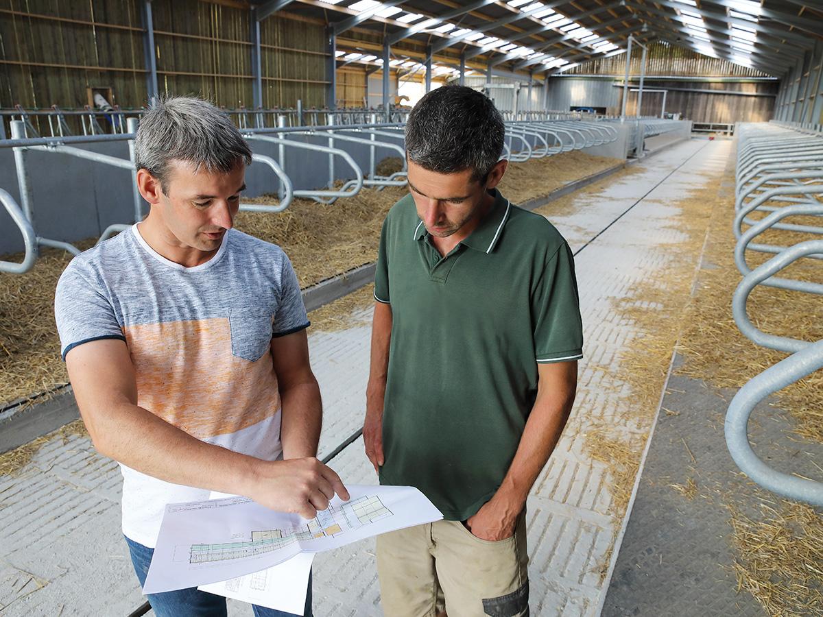 Photographie BTPL en bâtiment pour bovins